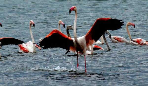 flamingonaupliokakokairia