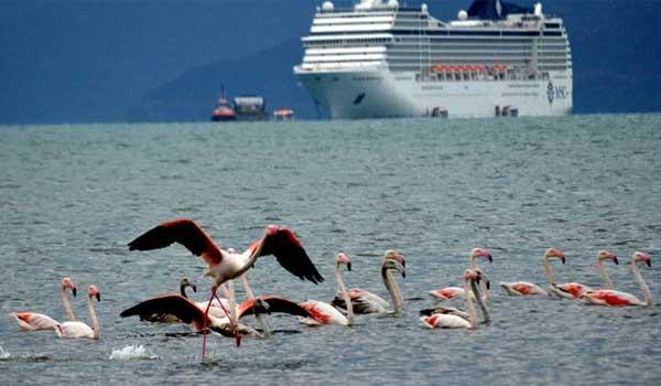 flamingonaupliokakokairia2